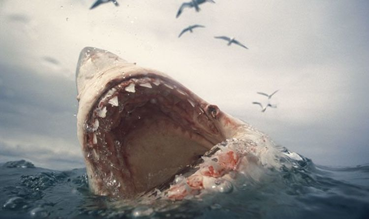 Megalodon shock discovery: Huge killer shark may have been wiped out