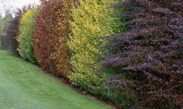 Alan Titchamrsh, Garden, Barrier, Pivet, Hedge, Wildlife