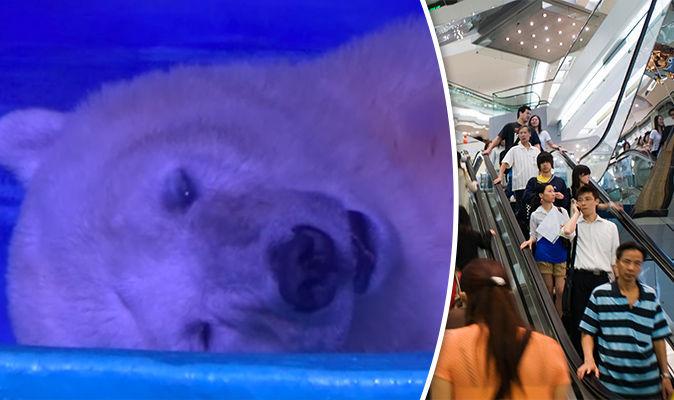 Meet The Worlds Saddest Polar Bear Called Pizza World