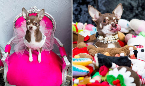 Britain S Most Pampered Pooch Animal Lover Spends 30k On Her Pet