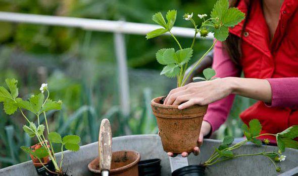 Alan Titchmarsh, Garden, Pot, Container, Fruit, Vegetable, UploadExpress