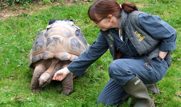 Giant tortoise gets \'VACUUM-PACKED\' by vets to fight infection ...