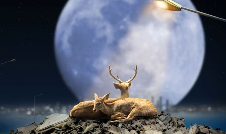 July Buck Moon: The first Full Moon of the Summer peaks