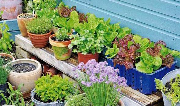 Superior Alan Titchmarsh, Grow, Vegetable, Garden
