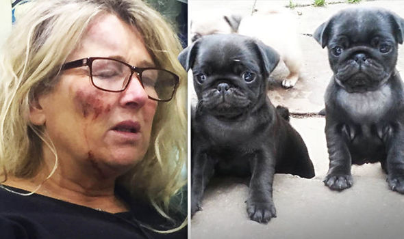 Pedigree pug puppy missing after thugs brutally attacked