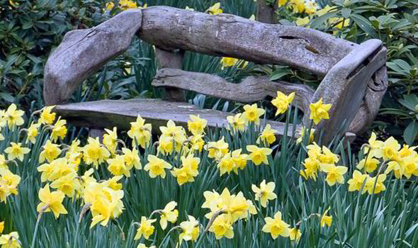 Bulbs such as daffodils look pretty in a naturalised lawn