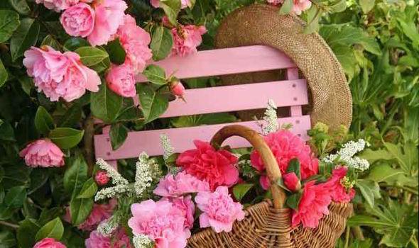 Alan Titchmarsh Tips On Growing Camellias Express