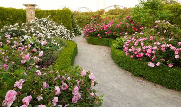 Alan Titchmarsh S Tips On Growing Roses In Your Garden This Summer