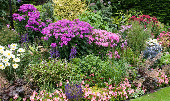 Start Your Garden Upgrade With The Borders Using Different Bedding Plants  To Add Interest And Colour