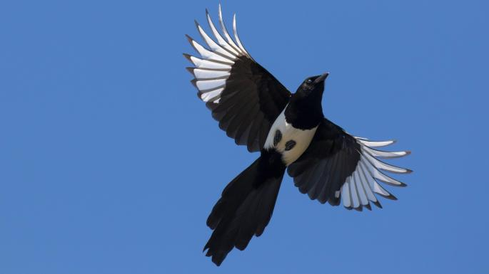 Versailles magpie steals a king's ransom from fountain | World | The
