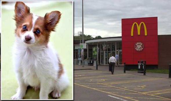 A Blind Puppy Was Found Crying After Being Abandoned At A Motorway