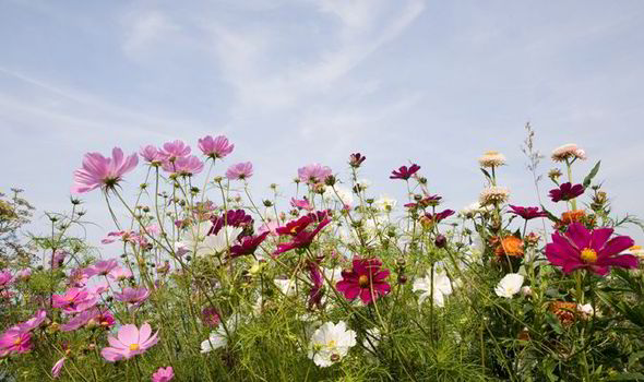 Gardening, Deborah Stone, Express Online, Daily Express, Garden Features,  Flowers,