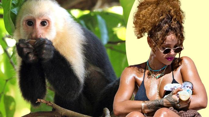 Morons' with pet monkeys drive me wild, says professor