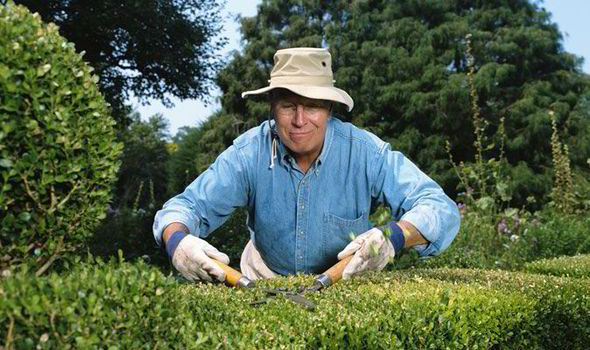 Best Hedges And How To Plant Them