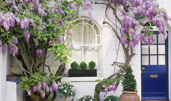 Wisteria Growing Against A Window