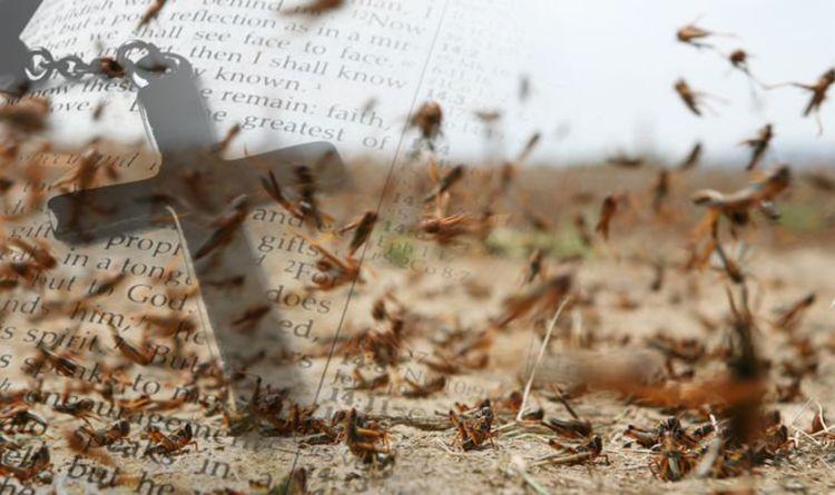 Bible prophecy: Locust swarm in Saudi Arabia proves bible plagues