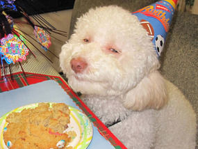 Riley Sports A Big Smile And Hat As He Tucks Into Canine Cake At His Party