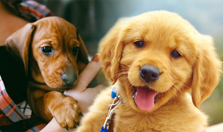 cute puppy pictures the science behind why little puppies are