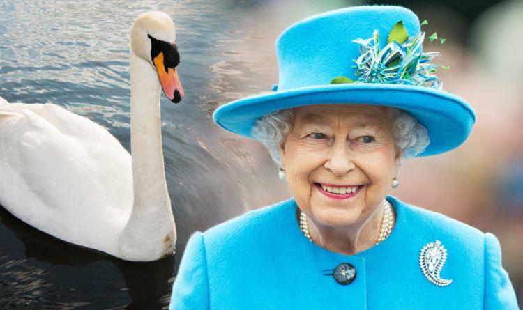 the-swan-belong-to-the-queen-in-UK