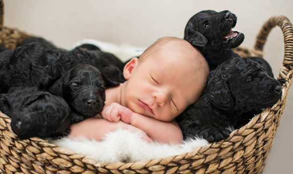 Cute Puppies And Adorable Baby Boy Born Hours Apart World News Express Co Uk