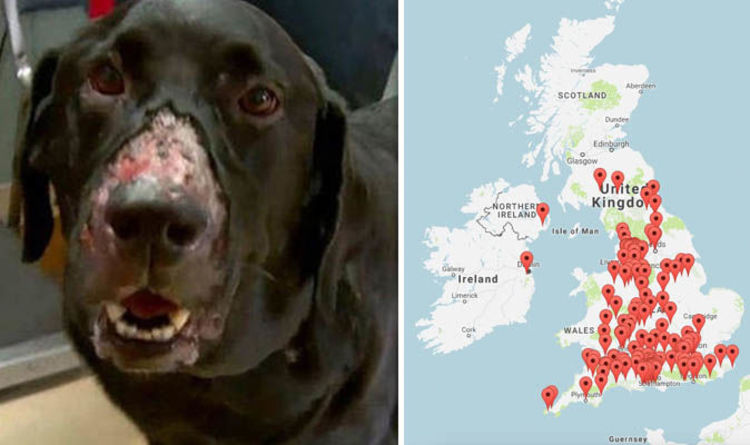 Alabama Rot Map Where Is Alabama Rot In The Uk Dogs Black Reaches Record Levels